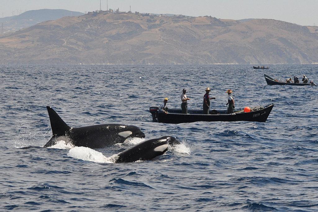 Orques et pêcheurs