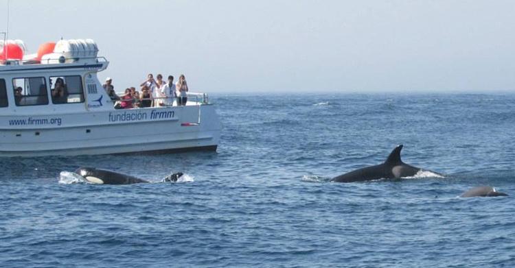 Orques et touristes