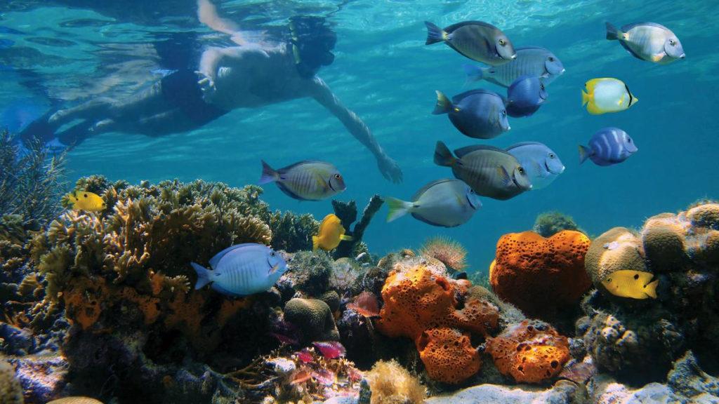 Plongée parmi les coraux